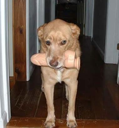 Hunden kom oväntat med en dildo i munnen